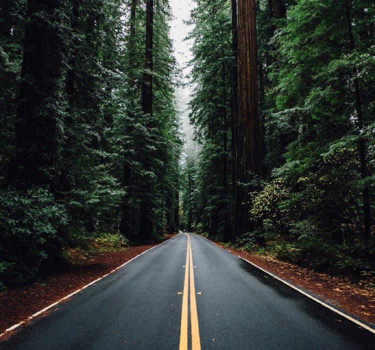 Ты сама выбираешь дорогу своей жизни